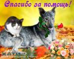 Благодарим Аллу Радину, Анну Лямцеву, Анну Тимошенко